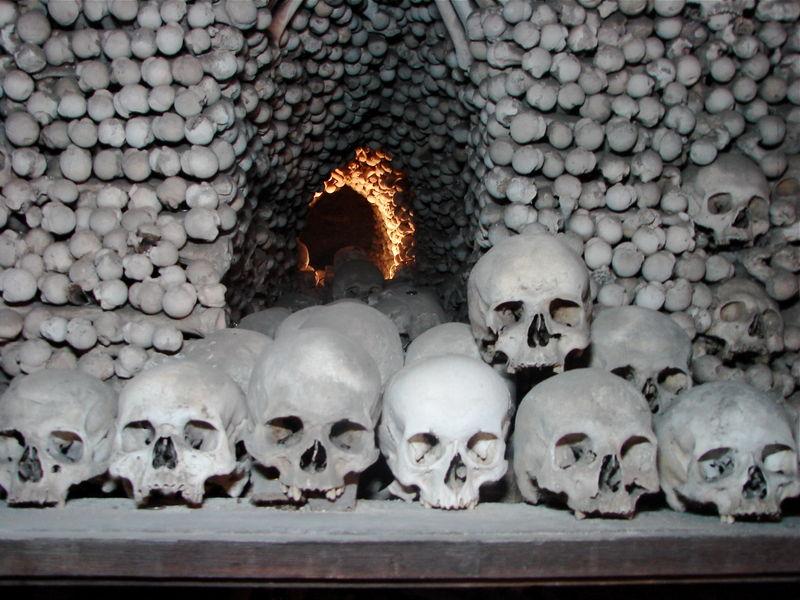 6 bones