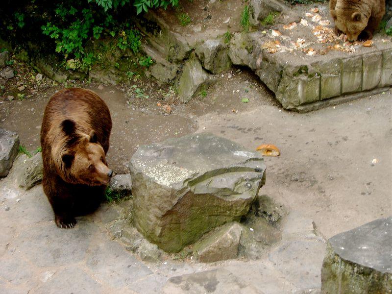 05 BEAR