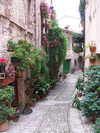 4_flowered_walkway_spello