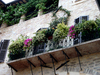 4_spello_flowers_2